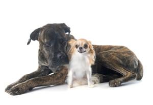 uppfostra hundar
